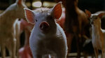 "Watch the movie clip ""Pig Chase"" from ""Babe: Pig In The City"""
