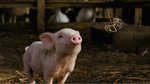 "Watch the movie clip ""Meeting Charlotte"" from ""Charlotte's Web"""