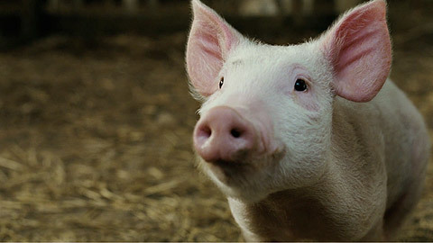 promise for wilbur movie clip from charlottes web at wingclipscom